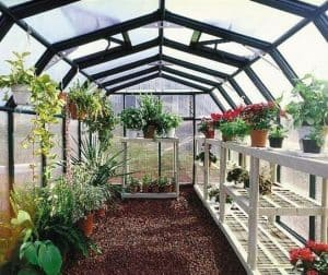 Rion Grand Gardener's Plastic Greenhouse 8 X 20 internal view