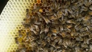 Beekeeping Afloat