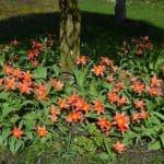 The Blooming Garden