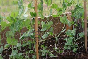 The Garden Smallholder