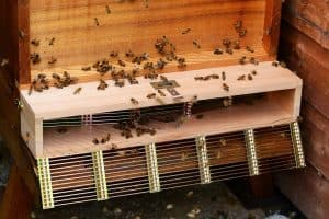 Bee Window Box