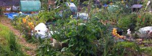 Horticultural Hobbit