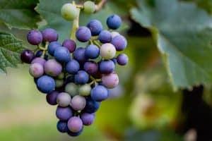 Purple & Blue Fruit & Vegetables