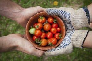 Red Fruit & Vegetables