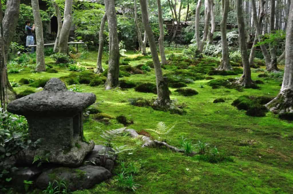 Gioji-Temple-moss